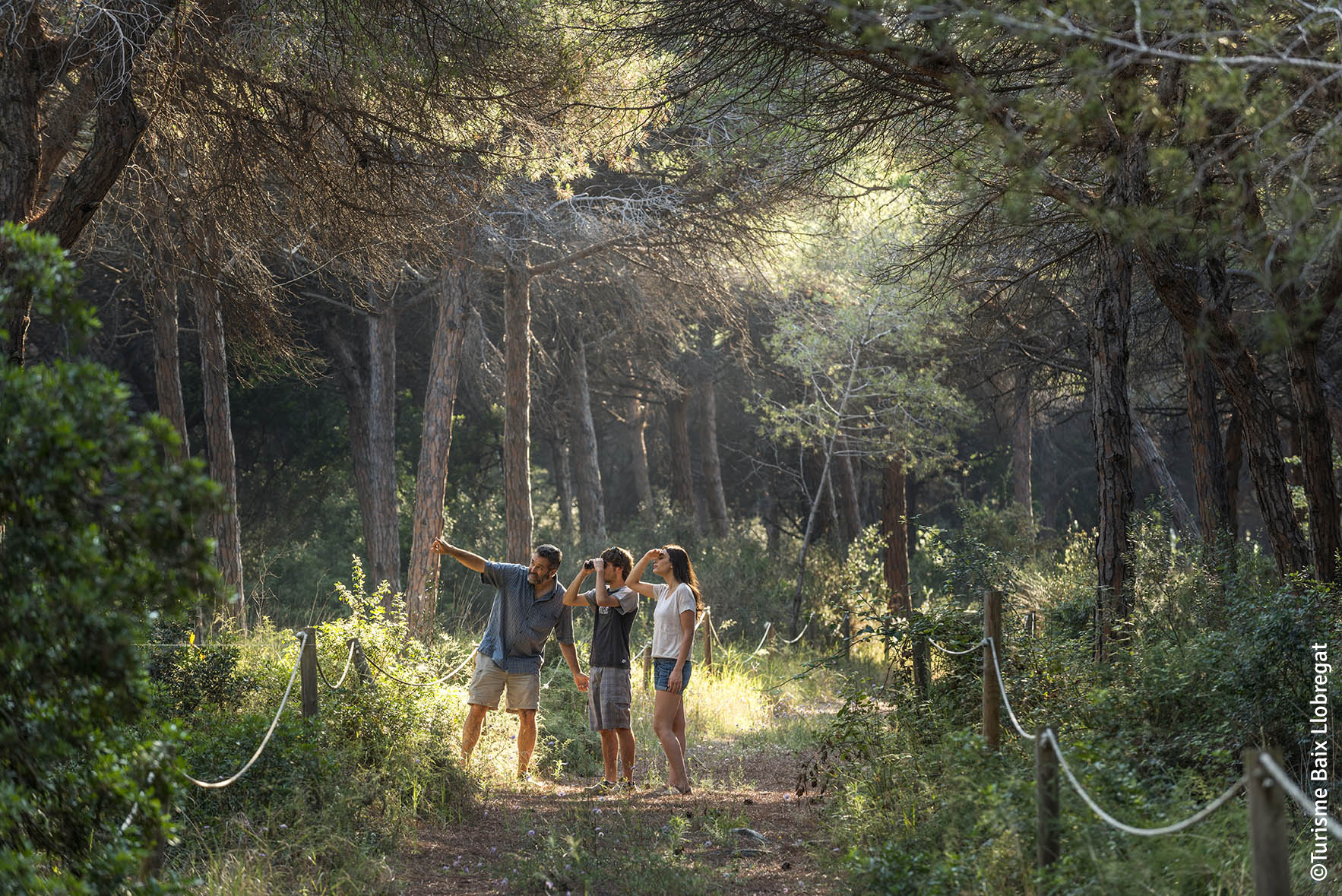 The Can Camins pine forest, one of the best preserved forest areas along the Catalan coastline.