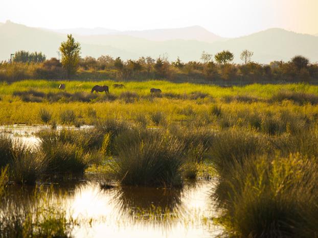 The Llobregat River Delta, 98km2-wide wetland ecosystem that hosts a remarkable ecological value.