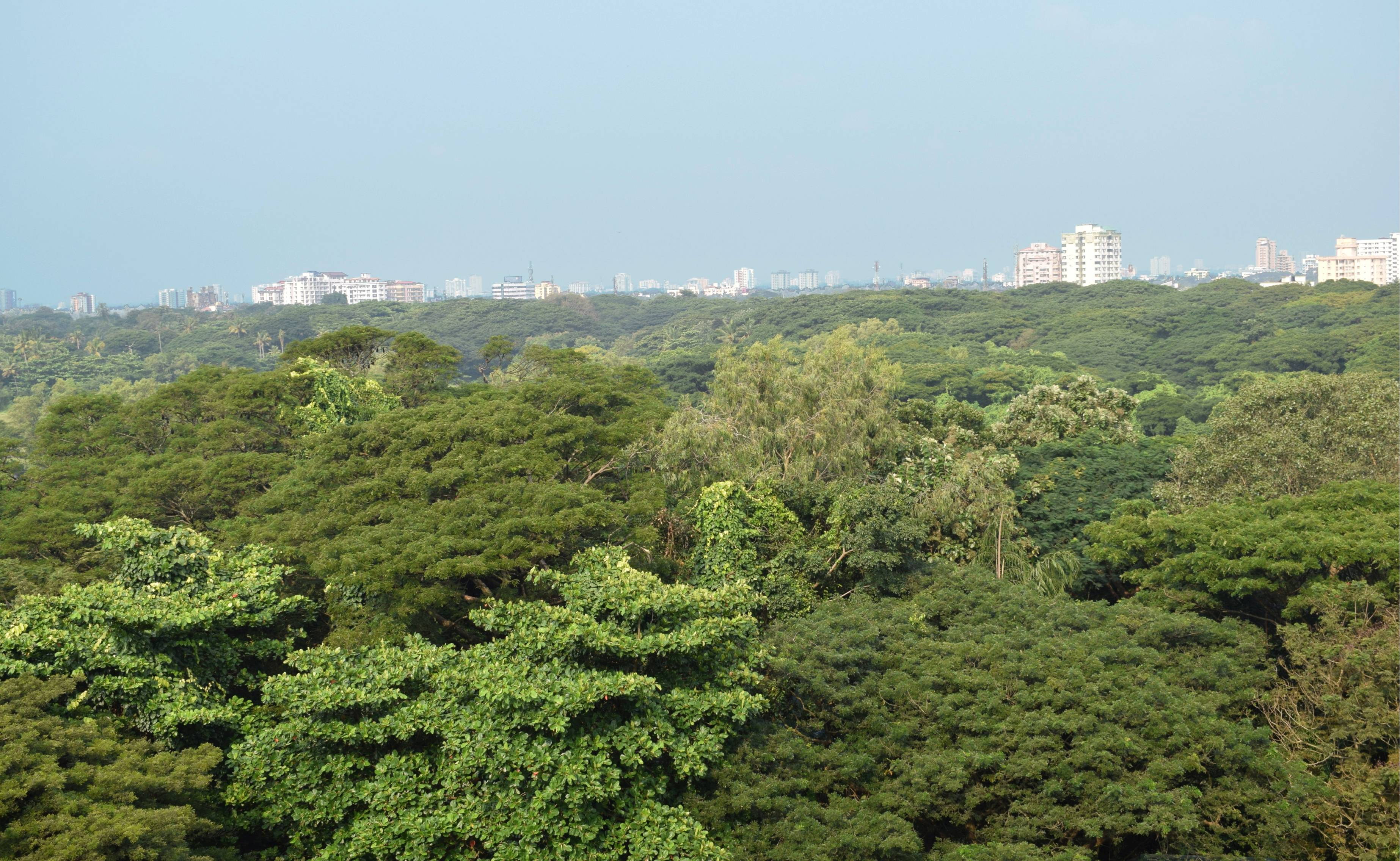 A view of city from Mangalavanam Bird Sanctuary