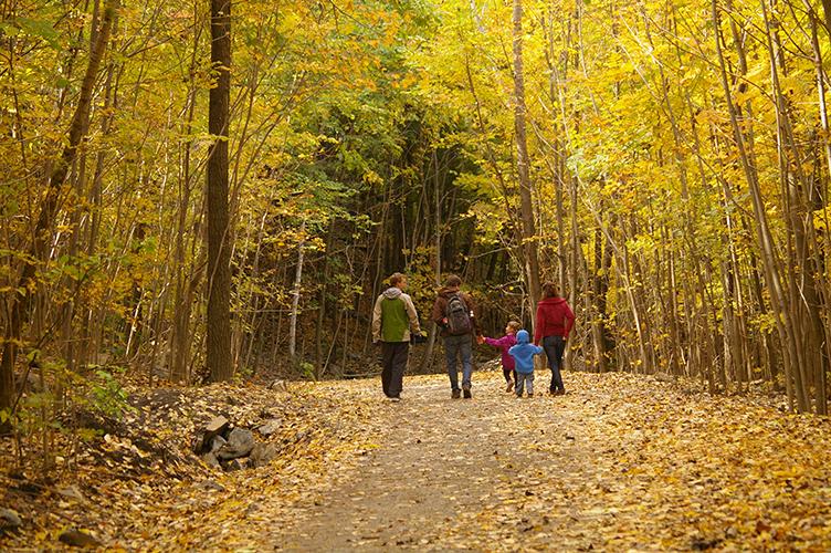 Autumn colors in Mount Royal Park (credit: Ville de Montréal)
