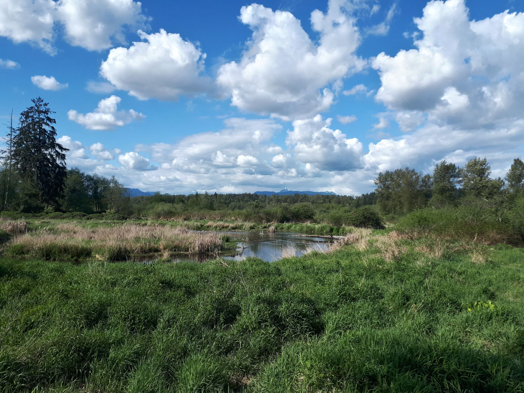 Found in the northeast part of Surrey, Charles Richardson Nature Reserve is a mix of old-field, forest and wetland habitat and one of four special management parks with a focus on biodiversity.